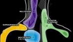 Cervicogenic (Neck) Headaches